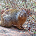 friendly squirrel at Zion Nat'l Park