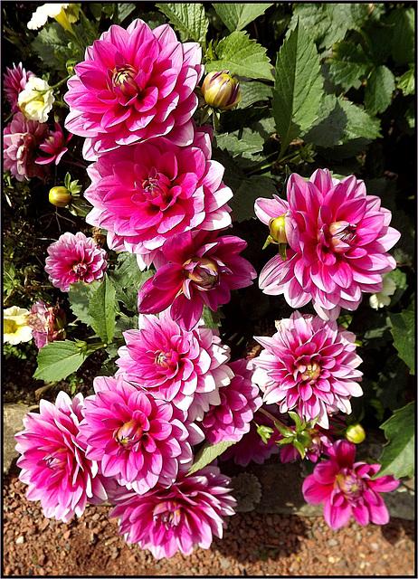 Flora 058