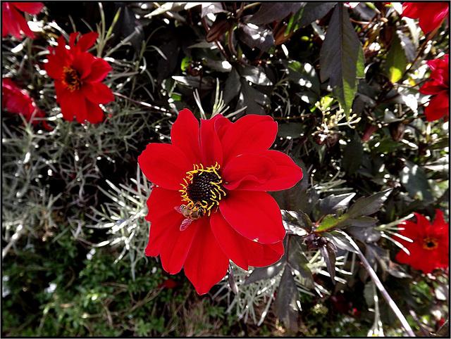 Flora 061