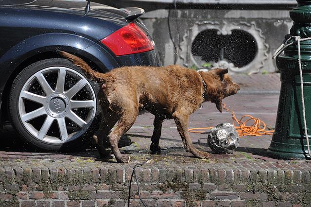 Dog drying itself