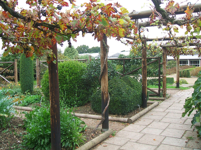 Vine-covered Pergola