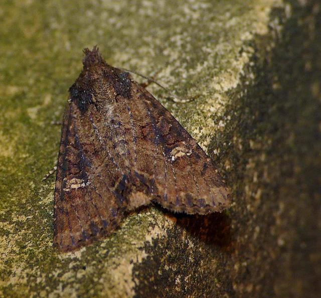 Lesser-Common Rustic