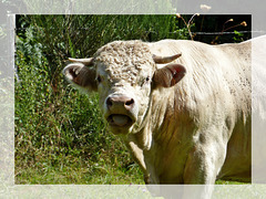 C'est MÔA le mec du troupeau...et t'avises pas de m'appeler Frisette... :o))