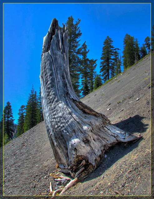Silver Stump