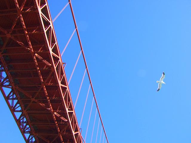 Bridge, Bird
