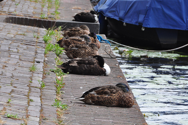 Sometimes you need to put your ducks in a row