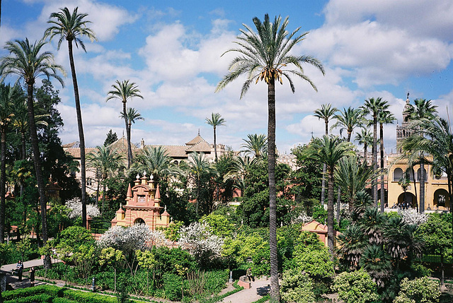 Seville Real Alcazar 16 M7