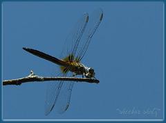 Backyard Fly-In ~~