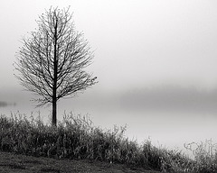 Lone Tree in Fog - My first digital photograph.  No idea what I was doing.