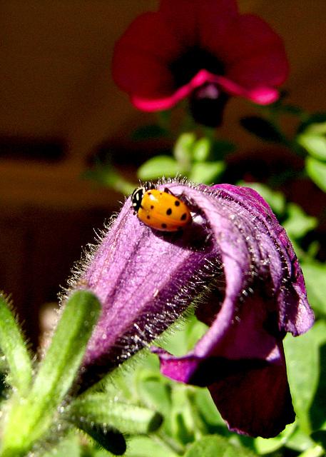 It was a Lady Bug