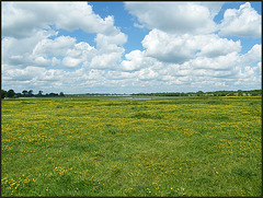 clouds and buttercups