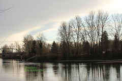 Skagit River Winter