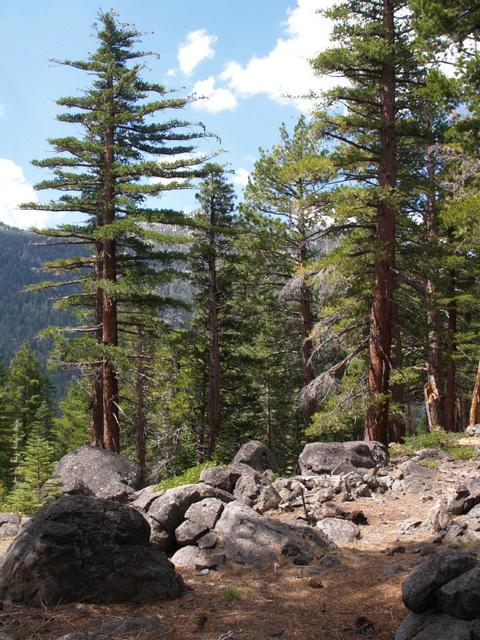 Tahoe (p8312132)