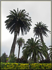 Conservatory of Flowers: Palm Trees