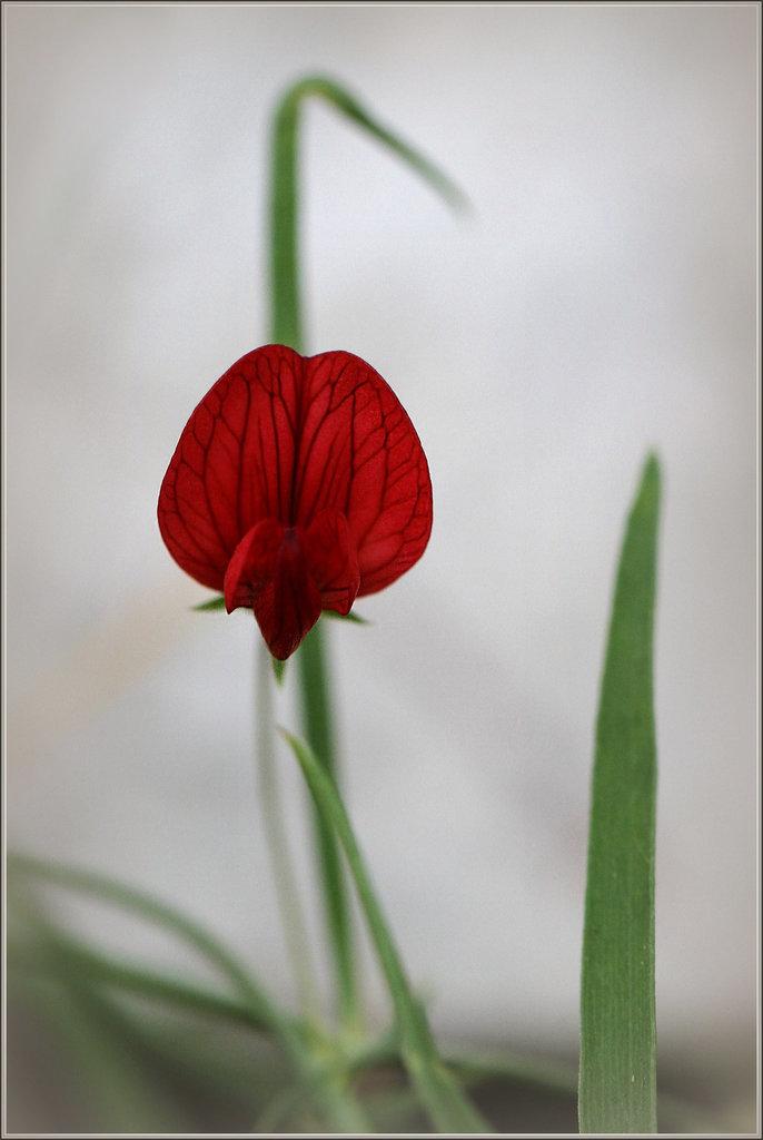 Une fleur par jour.... - Page 2 20005683.e552b701.1024