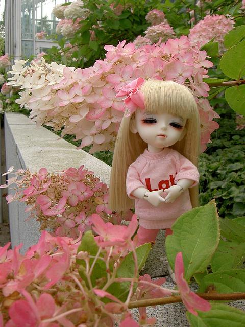 Lumi and a hydrangea