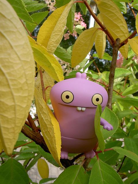 Babo in a bush