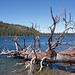 Tahoe (p8301989)