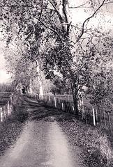 Memories Of Vienna Woods