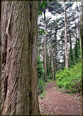 Trail up Mt. Davidson