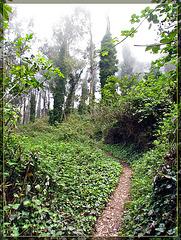 Ivy-Covered Trail Up Mt. Davidson