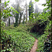 Ivy-Covered Trail Up Mt. Davidson