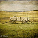 Conestoga Wagon - Lenabem Texture - Flickr Explore 11/08/11 #322