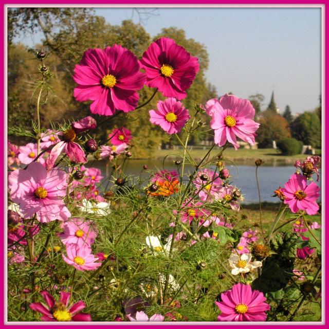 Espace fleurs