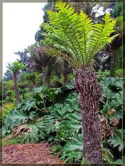 Dinosaur Palm Tree