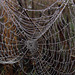 Morning Dew on a Spider Web