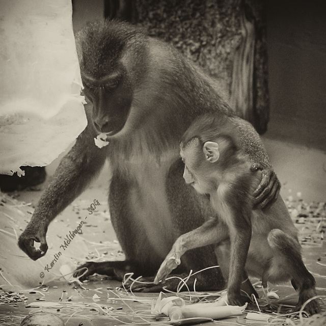 Mama und Sohn (Hellabrunn)
