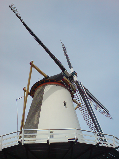 Molen wings
