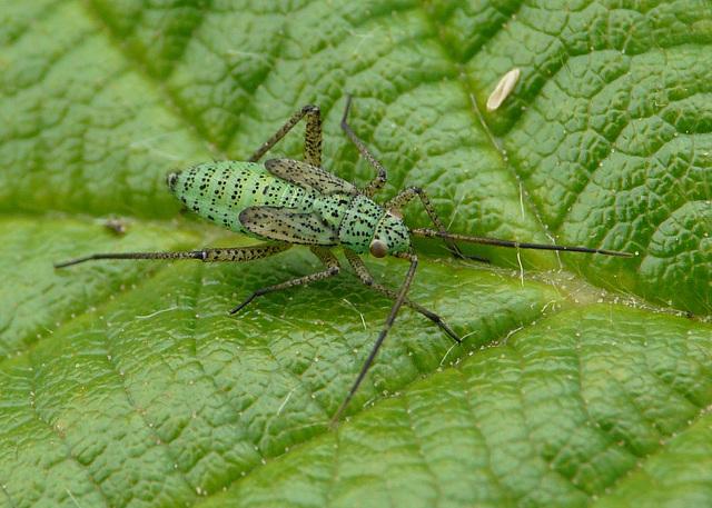 Strange Little Bug