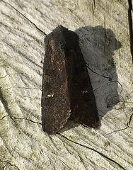 Black Rustic