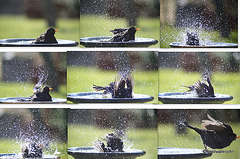 It's called a bird bath, because birds bathe in it!