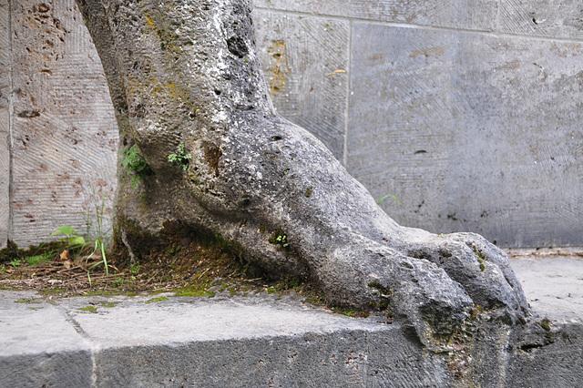 Vogelsang IP – Foot of the Torchbearer