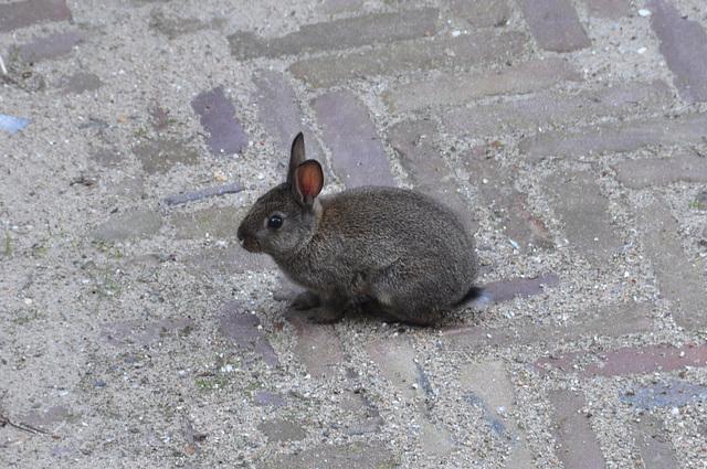 New wildlife around the office: little rabbit
