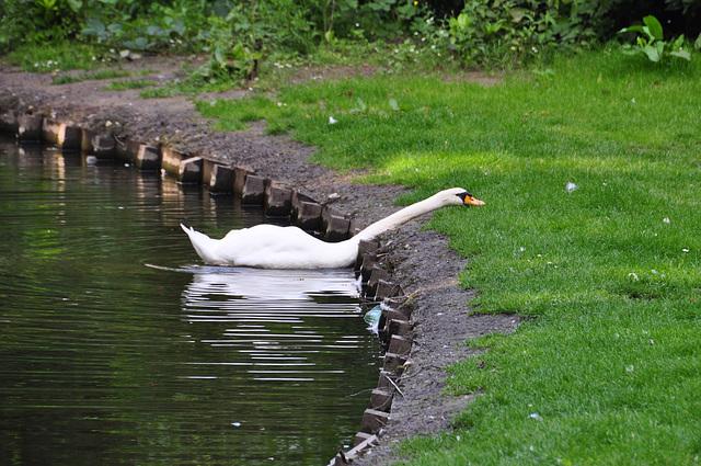Swan acrobatics