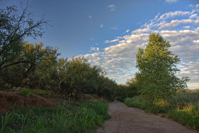 Javelina Trail