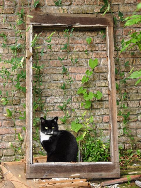 Cat in a frame