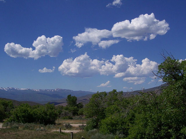 Wasatch County in the summer