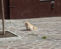 grumpy cat-face