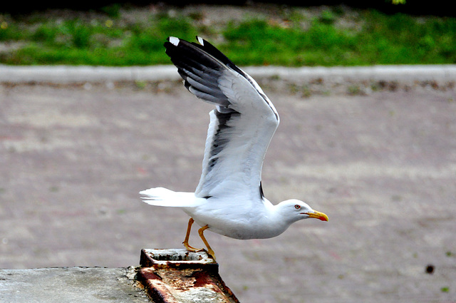 Gull Airlines flight 51 ready for take-off