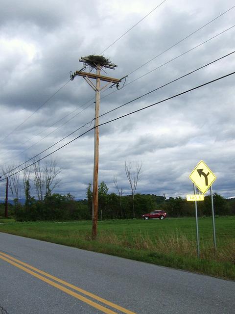 Giant Bird's Nest #2