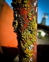 Rust, Lichen, Moss, oh my!