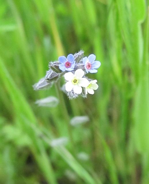 Lovely Tiny Blossoms