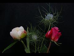 la pivoine,la rose et les nigelles