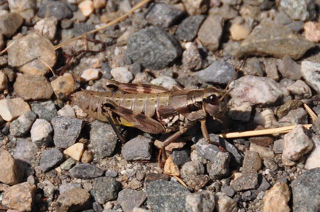 Holiday 2009 – Grasshopper