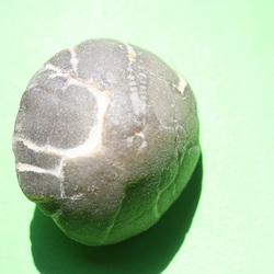 Sea Urchin well worn 01