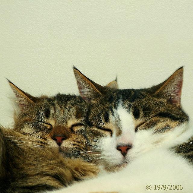 Max & Miss Kitty